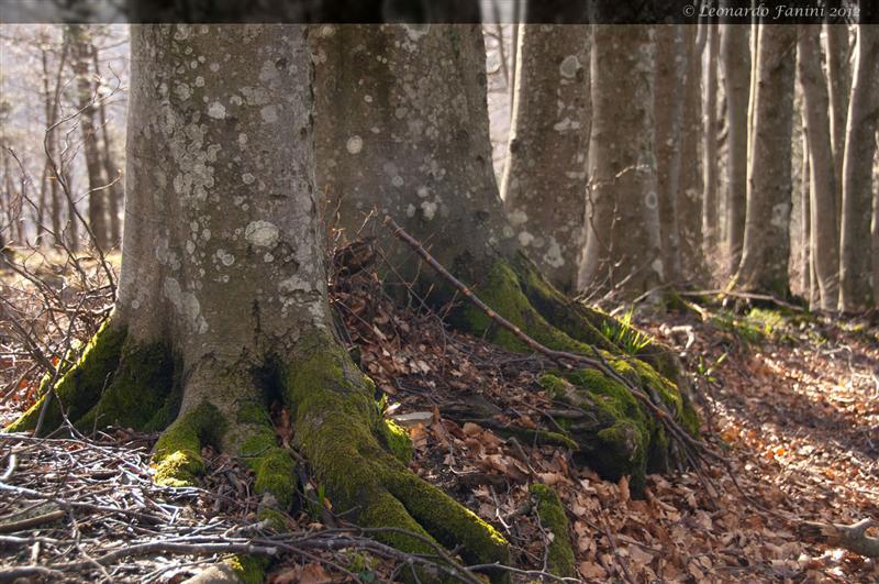 Luci del sotto bosco alla Calla